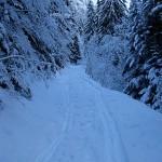 Le chemin de la forêt de Joux