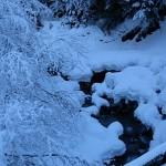 Ruisseau affluent du Fier